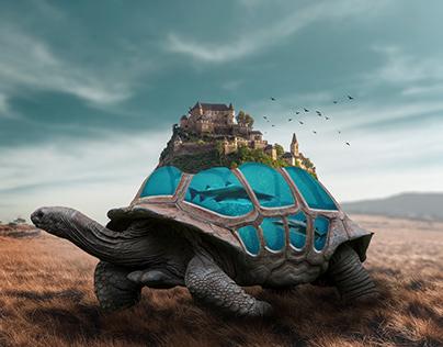 Tortoise Island Aquarium