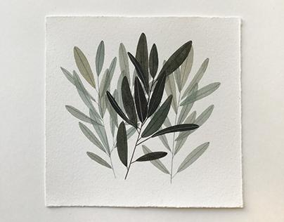 Small Plant studies