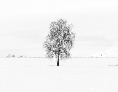 Lonely Birch in Winter '21