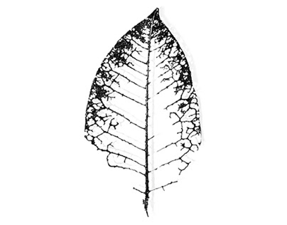 Black and White Digital Art Foliage