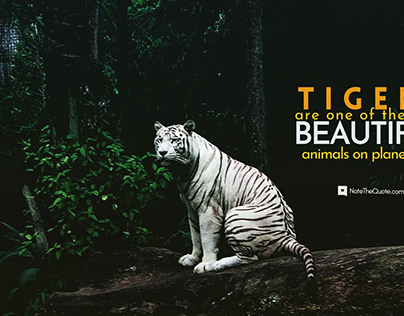 World Tiger Day 29th July Quotes, slogans, Messages