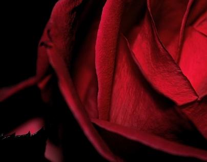 Dark Romantic Red Rose HD Wallpaper 1920x1080