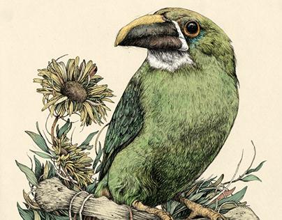Ilustración naturalista con bolígrafo