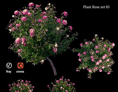 Plan rose set 05