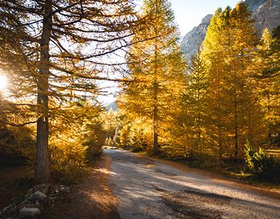 Season : Autumn