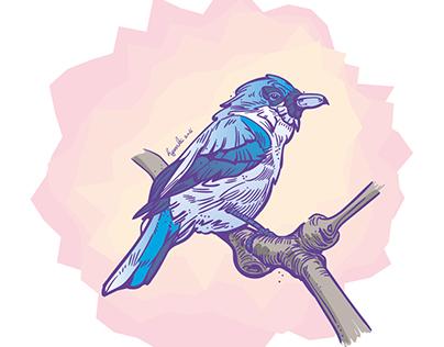 blue vanga bird