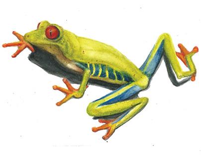 Watercolors - nature