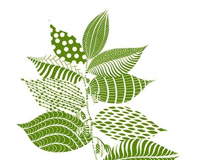 Plant Illustrations Created in Adobe Fresco