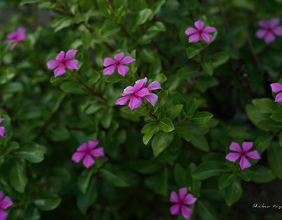 FLOWER GARDEN IN KOSHI PARK