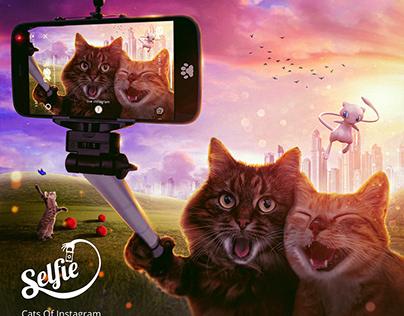 Cats Of Instagram