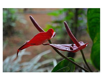 ANTHOPHILE (1) : a lover of flower