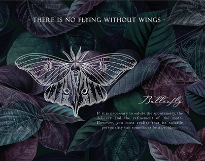 graphics. illustration. dragonfly & butterfly