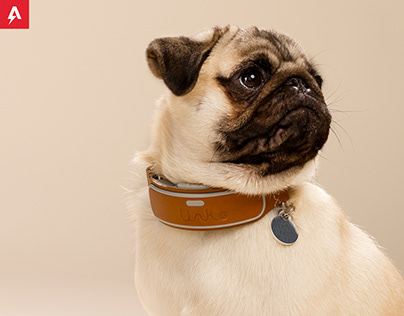 Link Smart Collar for American Kennel Club