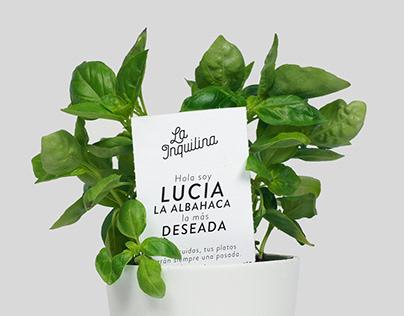 La Inquilina - Aromatic plants