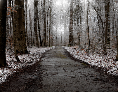 Lost in a white old forest