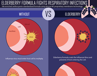 Elderberry Formula Fights Respiratory Infections