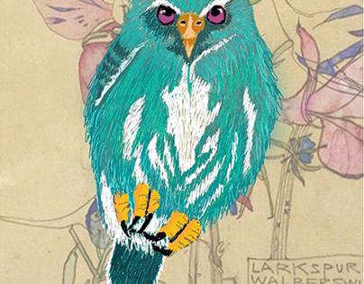 Dwarf Owl
