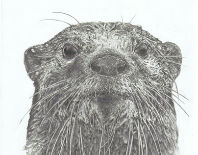 Ilustrando a Natureza (drawing nature)