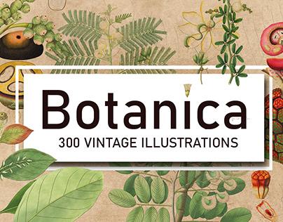 300 Vintage Botanical Illustrations