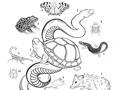 Gopher Tortoise: A Keystone Species of Florida