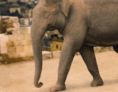 elephant in Amman citadel