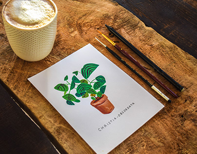 Illustration - Plants