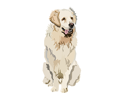 Golden Retriever Digital Ilustration