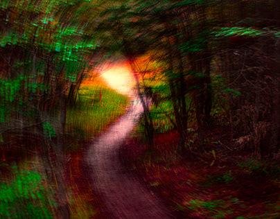 Una visita al bosque