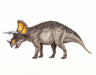 Dinosaur illustrations 3
