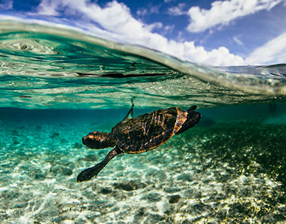 The Unique Challenges of Underwater Photography