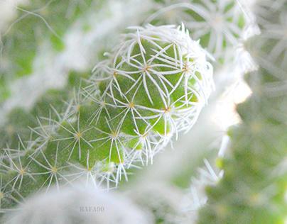 Tender cactus