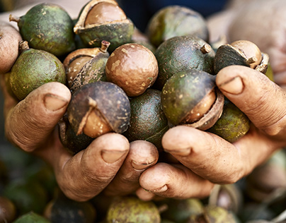Australian Macadamia
