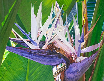 """""""Tropical"""" Painting"""
