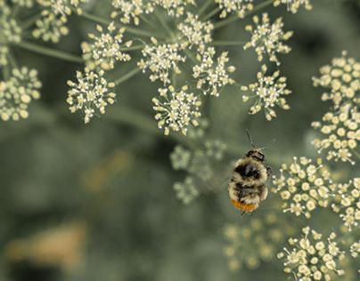 the meditating bumblebee :-)