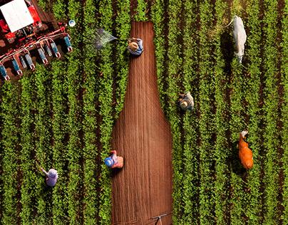Ecuador Siembra