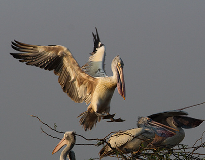 Glimpses Of Uppalapadu-Bird Documentary