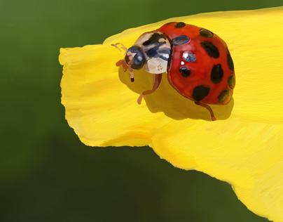 213 Ladybug