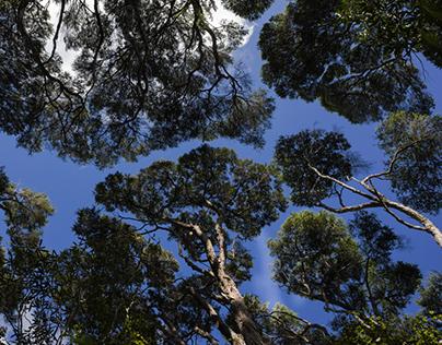 Aotearoa Trees