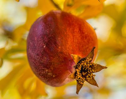Persephone Spied a Pomegranate