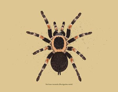 Entomology illustration