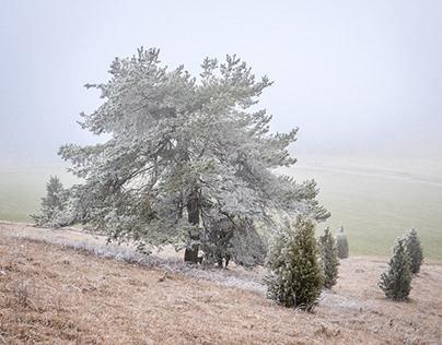 Frozen Trees [color]
