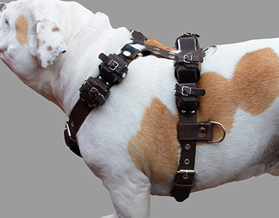 Best Dog Harness Leather