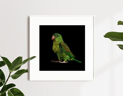 Ilustración Digital Loro a color