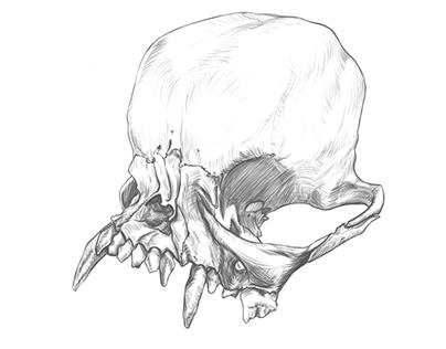 Skull Sketch, Time-lapse video.