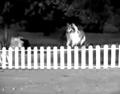 """Protección """"Lassie"""""""