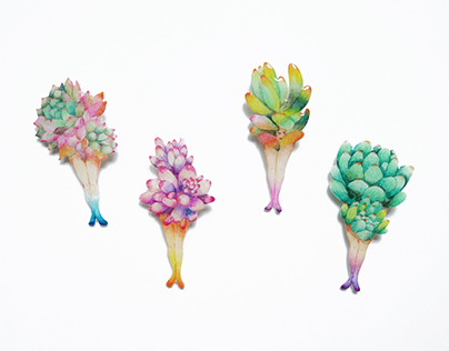 Succulentist Brooches