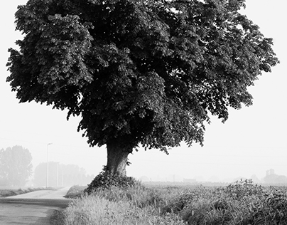 Solitairy Trees