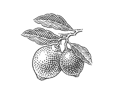 Small engravings of citruses for a package