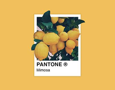 My Favorite Pantone Colors