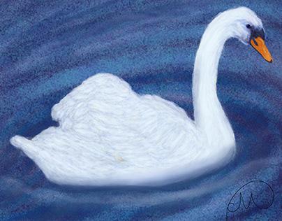 the swan - digital painting